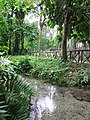 Buatong Waterfall And Jedsee Fountain Forest Park - panoramio (1).jpg