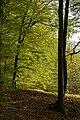 Buchberg Waldimpression 20200415 01.jpg