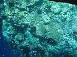Taman laut Bunaken dilihat dari dalam perahu katamaran