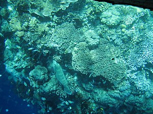 Bunaken - Bunaken marine park