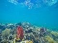 Bunte Korallen (27083940306).jpg