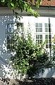 Burg auf Fehmarn, Haus Breite Straße 28, Rosen.JPG
