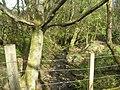 Burn through Finniescroft Wood, near Lennoxtown - geograph.org.uk - 164685.jpg