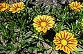 Butchart Gardens - Victoria, British Columbia (29227664405).jpg