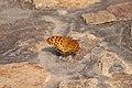 Butterfly on Hong Kong Walk (5235044202).jpg