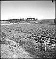 CH-NB - USA, Pine Mountain Valley-GA- Landschaft - Annemarie Schwarzenbach - SLA-Schwarzenbach-A-5-11-111.jpg