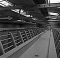 CNRZ porcheries expérimentales années 60-1-cliche Jean Joseph Weber.jpg