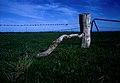 CSIRO ScienceImage 1556 Quaint farm gate.jpg