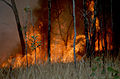 CSIRO ScienceImage 391 Burning as Land Management.jpg