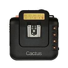 Camera hidden in a cactus