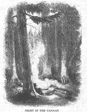 "Canaan Valley - David Hunter Strother's 1853 engraving ""Night in the Canaan"". No trace of the great primeval red spruce forest remains today."