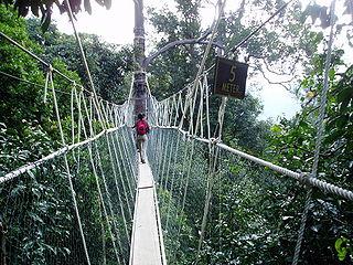 Gångbro högt ovan marken i Malaysias regnskog.