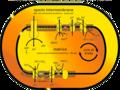 Catena di trasporto degli elettroni.png