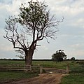 Cattlegrid on the Midshires Way - geograph.org.uk - 454866.jpg