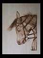 CavalloStrike.jpg