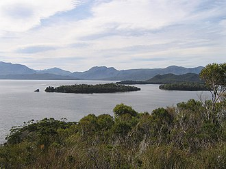 South West Wilderness - The Celery-Top Islands on Bathurst Harbour are crowded with celery-top pines
