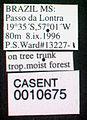 Cephalotes atratus casent0010675 label 1.jpg
