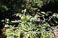 Chadwick Arboretum and Learning Gardens (30629634507).jpg