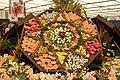 Chelsea Flower Show 2014 - Flower box display 1.jpg