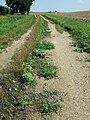 Chenopodium vulvaria sl118.jpg