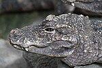 China Alligator Nature Reserve