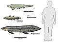 Chinle fish.jpg