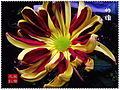 Chrysanthemum Contest.jpg