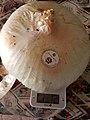 Cipolla di Giarratana -2.jpg