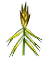 Cleaned-Part of Carex microglochin.PNG