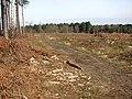 Clearfell in Shouldham Warren - geograph.org.uk - 1739258.jpg