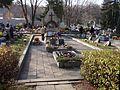 Cmentarz wojenny nr 366 - Limanowa 1.jpg