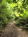 Coast path through Barton Wood - geograph.org.uk - 1431404.jpg
