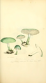 Coloured Figures of English Fungi or Mushrooms - t. 42.png