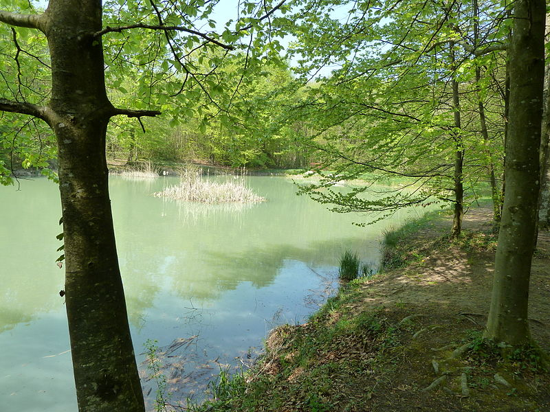 Commercy (Meuse, France): L'étang de la Fontaine Royale.