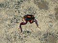 Cool Bug - Flickr - GregTheBusker (1).jpg