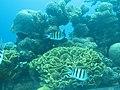 Coral World Underwater Observatory 28.jpg