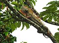 Costa Rica 72.DSCN3681-new (31093134156).jpg