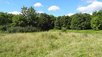 Covert Way - Pasture area in Covert Way