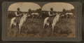 Cowboy, Bronco corral and camps, banks of the Yellowstone, Montana, U.S.A, by Keystone View Company.png