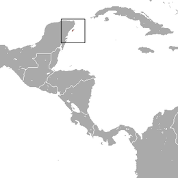 Cozumel Raccoon area.png
