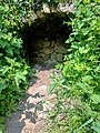 Creswell Gorge, Creswell Craggs, Notts (37).jpg