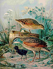 Old painting of two adults with a black, downy chick
