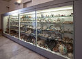 Crypta Balbi, vitrine with finds from the Middle Age and later.jpg