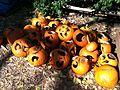 Cucurbita pepo Halloween pumpkin - Jack o' lantern graveyard.jpg
