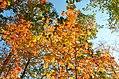 Cuyahoga Valley National Park (10355710603).jpg