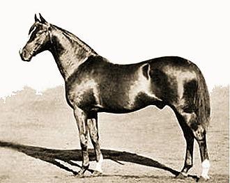 Cyllene (horse) - Image: Cyllene (GB)