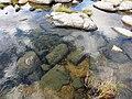 Czyściutka woda - panoramio.jpg