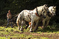 Débardage JEAN BAPTISTE RICARD mondial du cheval percheron 2011Cl J Weber07 (23975366332).jpg