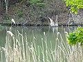 DSC02288 Teich zur Aufzucht autochthoner Fischarten, , ,.jpg