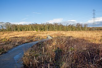 Danes Moss Nature Reserve - A path across the lowland bog, leading to the wooded area